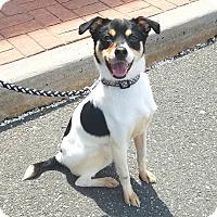 Adopt A Pet :: Cooper - Linden, NJ
