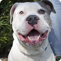 Adopt A Pet :: Kaine - Daytona Beach, FL