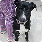 Adopt A Pet :: Harley (Needs Foster)