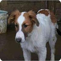 Adopt A Pet :: Sissy - Albany, NY