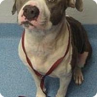Adopt A Pet :: Cookie - Gainesville, FL