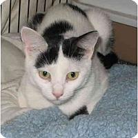 Adopt A Pet :: Trixie - Cincinnati, OH