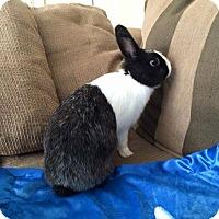 Adopt A Pet :: Lavender - Williston, FL