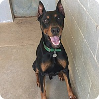 Adopt A Pet :: Bentley--pending - New Richmond, OH