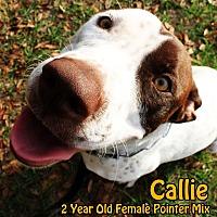 Adopt A Pet :: Callie - Zephyrhills, FL