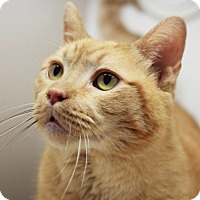 Adopt A Pet :: Jumbo - Redwood City, CA