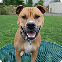 Adopt A Pet :: Patch - Wilmington, DE