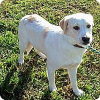 Adopt A Pet :: CHAMP - Courtesy Post - Glastonbury, CT