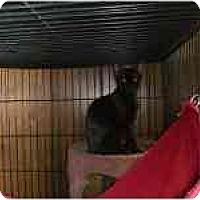 Adopt A Pet :: Double Trouble - Grand Rapids, MI