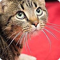 Adopt A Pet :: Boo Radley - Chicago, IL