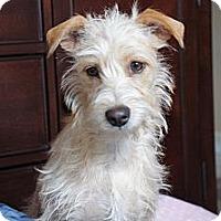 Adopt A Pet :: Roxie - Temple City, CA