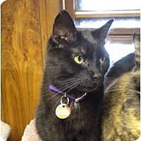 Adopt A Pet :: Dakota - Cleveland, OH