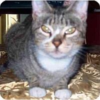 Adopt A Pet :: Flash - Summerville, SC