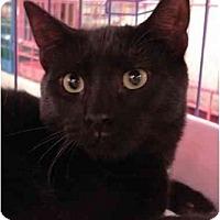 Adopt A Pet :: Carob - Chesapeake, VA