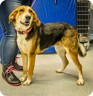 Hound (Unknown Type) Mix Dog for adoption in Martinsville, Indiana - Abby