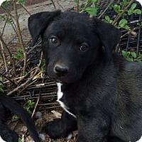 Adopt A Pet :: Carlsbad - Evergreen, CO
