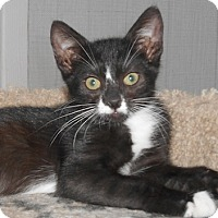 Adopt A Pet :: Lorenza - North Highlands, CA