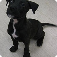 Adopt A Pet :: Ace - Gary, IN