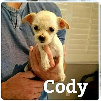 Terrier (Unknown Type, Small) Mix Puppy for adoption in Rancho Cucamonga, California - Cody