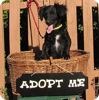 Dachshund/Terrier (Unknown Type, Medium) Mix Dog for adoption in Oakland, Arkansas - Percy