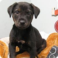 Adopt A Pet :: Jerry - Groton, MA
