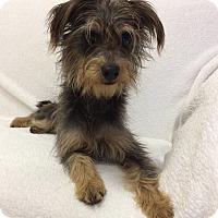Adopt A Pet :: Oliver - Mission Viejo, CA