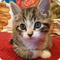 Adopt A Pet :: Allie - LaJolla, CA