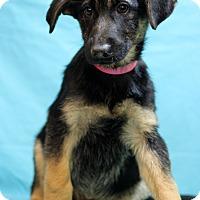 Adopt A Pet :: Beti - Waldorf, MD