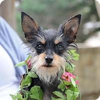 Adopt A Pet :: TESSA - McKinney, TX