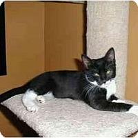 Adopt A Pet :: Zack - Portland, OR