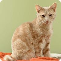 Adopt A Pet :: Abbott - Reston, VA