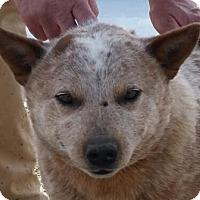 Adopt A Pet :: Elliott - Huntingburg, IN