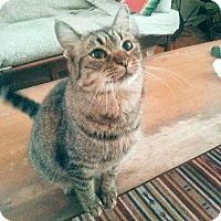 Adopt A Pet :: Lisa - Los Angeles, CA