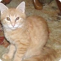 Adopt A Pet :: HORACIO - Acme, PA