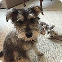 Adopt A Pet :: May - Laurel, MD