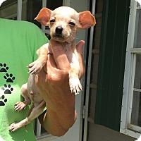 Adopt A Pet :: Banain - Groton, MA