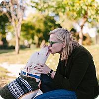 Adopt A Pet :: Finn - Reisterstown, MD