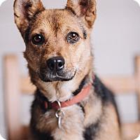 Adopt A Pet :: Mamas - Portland, OR