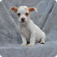 Adopt A Pet :: Casper - Atlanta, GA