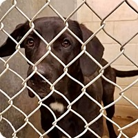 Adopt A Pet :: Sullivan - ADOPTED! - Zanesville, OH