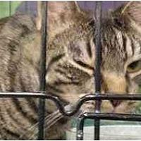 Adopt A Pet :: Pepita - Chino, CA
