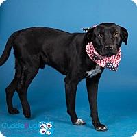 Adopt A Pet :: Ferris - Irving, TX