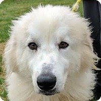 Adopt A Pet :: Gilbert - Silver Spring, MD