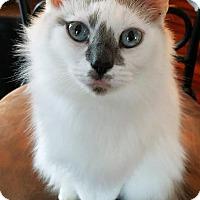 Adopt A Pet :: Mocha - Burlington, NC