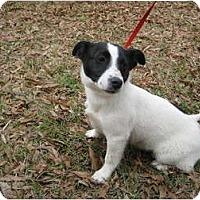 Adopt A Pet :: Jazz - courtesy post - Glastonbury, CT