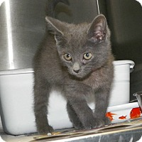 Adopt A Pet :: Josephine - Dover, OH