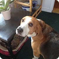 Adopt A Pet :: Remington - Douglas, ON
