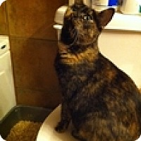 Adopt A Pet :: Lily - Vancouver, BC