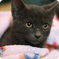 Adopt A Pet :: Anja - Canoga Park, CA