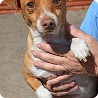 Adopt A Pet :: Pancho - Aurora, CO